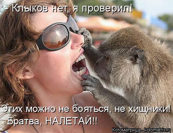 Котоматрица: - Клыков нет, я проверил! Этих можно не бояться, не хищники! Братва, НАЛЕТАЙ!!