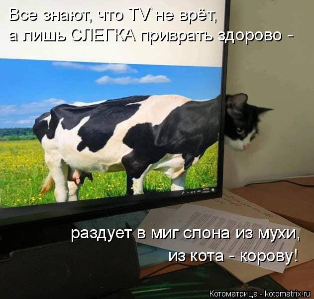 Котоматрица: Все знают, что TV не врёт,  раздует в миг слона из мухи, из кота - корову! а лишь СЛЕГКА приврать здорово -