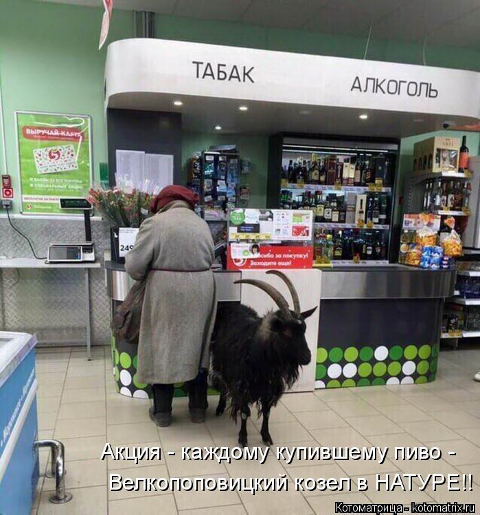 Котоматрица: Акция - каждому купившему пиво - Велкопоповицкий козел в НАТУРЕ!!