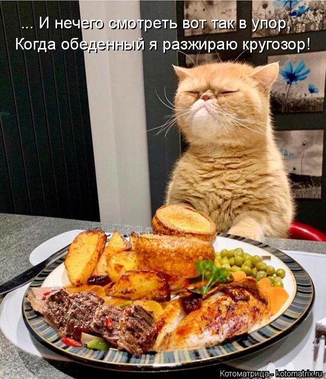 Котоматрица: ... И нечего смотреть вот так в упор, Когда обеденный я разжираю кругозор!