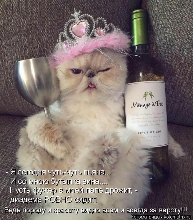Котоматрица: - Я сегодня чуть-чуть пьяна... И со мною бутылка вина.... Пусть фужер в моей лапе дрожит, - диадема РОВНО сидит! Ведь породу и красоту видно всем ?