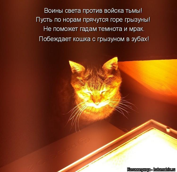 Котоматрица: Не поможет гадам темнота и мрак. Побеждает кошка с грызуном в зубах! Пусть по норам прячутся горе грызуны! Воины света против войска тьмы!