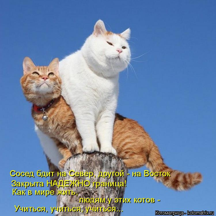 Котоматрица: Сосед бдит на Север, другой - на Восток Закрыта НАДЕЖНО граница! Как в мире жить, людям у этих котов - Учиться, учиться, учиться...