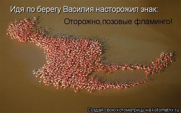 Котоматрица: Идя по берегу Василия насторожил знак: Оторожно,позовые фламинго!