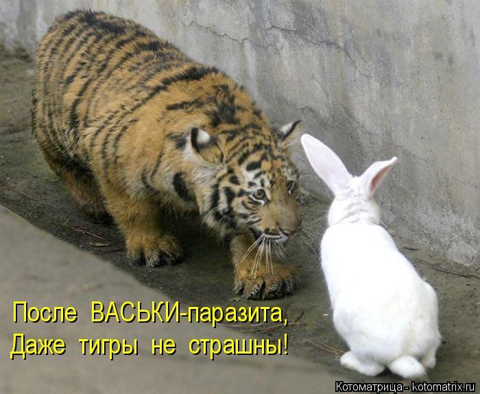 Котоматрица: После  ВАСЬКИ-паразита, Даже  тигры  не  страшны!