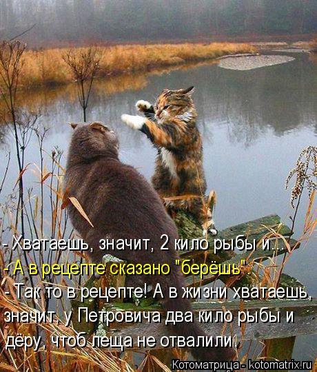 """Котоматрица: - Хватаешь, значит, 2 кило рыбы и... - А в рецепте сказано """"берёшь"""". - Так то в рецепте! А в жизни хватаешь, значит, у Петровича два кило рыбы и дёру,"""