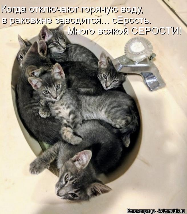 Котоматрица: Когда отключают горячую воду, Много всякой СЕРОСТИ! в раковине заводится... сЕрость.
