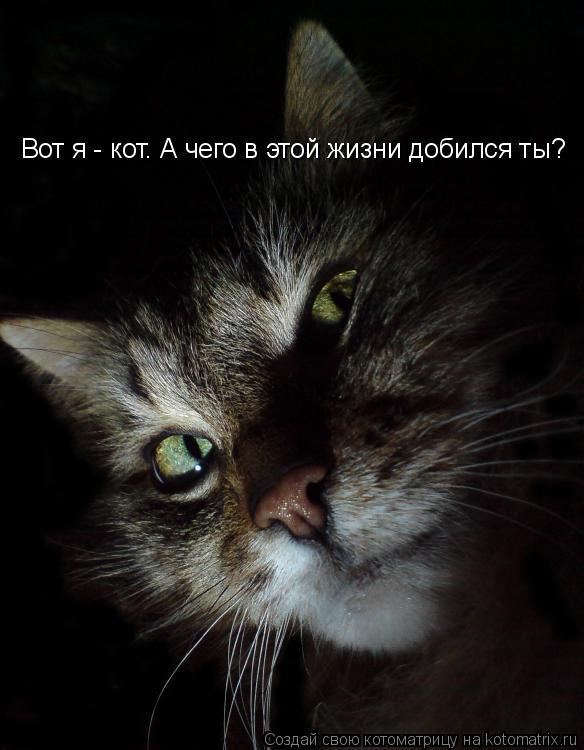 Котоматрица: Вот я - кот. А чего в этой жизни добился ты?