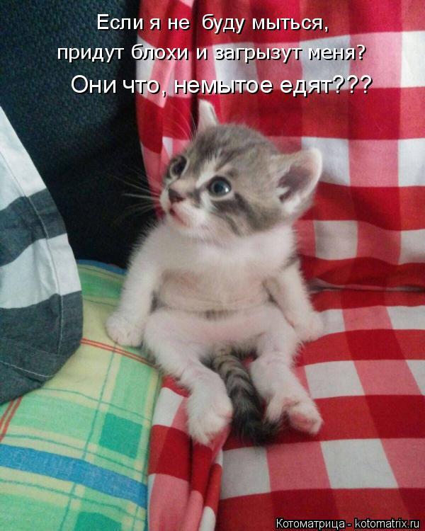 Котоматрица: Они что, немытое едят??? придут блохи и загрызут меня? Если я не  буду мыться,