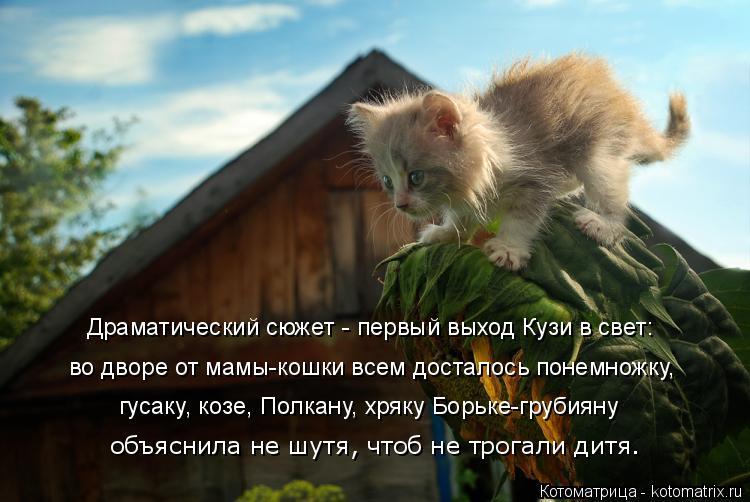 Котоматрица: Драматический сюжет - первый выход Кузи в свет: во дворе от мамы-кошки всем досталось понемножку, объяснила не шутя, чтоб не трогали дитя. гу?