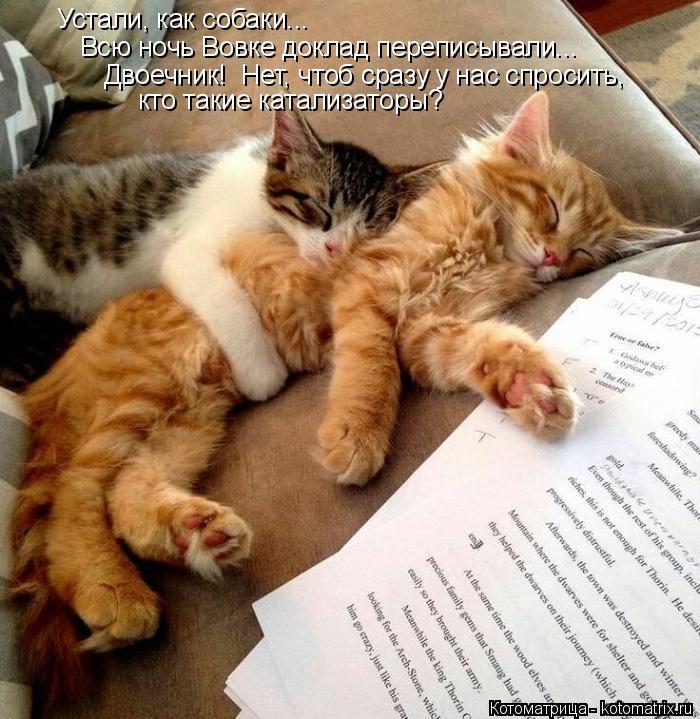 Котоматрица: Устали, как собаки... Всю ночь Вовке доклад переписывали... Двоечник!  Нет, чтоб сразу у нас спросить, кто такие катализаторы?