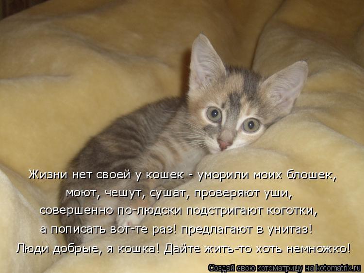 Котоматрица: Жизни нет своей у кошек - уморили моих блошек,  моют, чешут, сушат, проверяют уши, совершенно по-людски подстригают коготки, а пописать вот-те