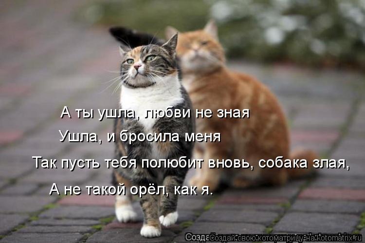 Котоматрица: А ты ушла, любви не зная Ушла, и бросила меня Так пусть тебя полюбит вновь, собака злая, А не такой орёл, как я.