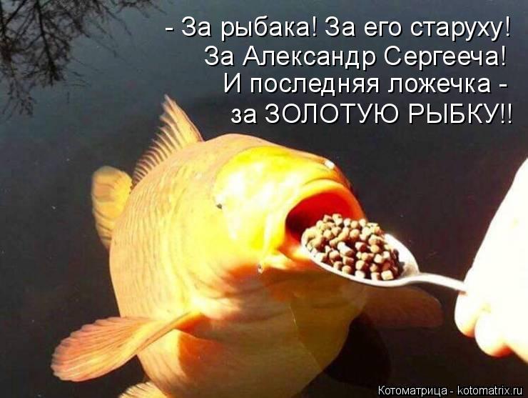 Котоматрица: - За рыбака! За его старуху! за ЗОЛОТУЮ РЫБКУ!! И последняя ложечка -  За Александр Сергееча!