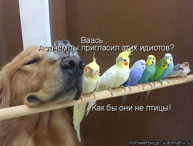Котоматрица: Ваась.. А зачем ты пригласил этих идиотов? Как бы они не птицы!