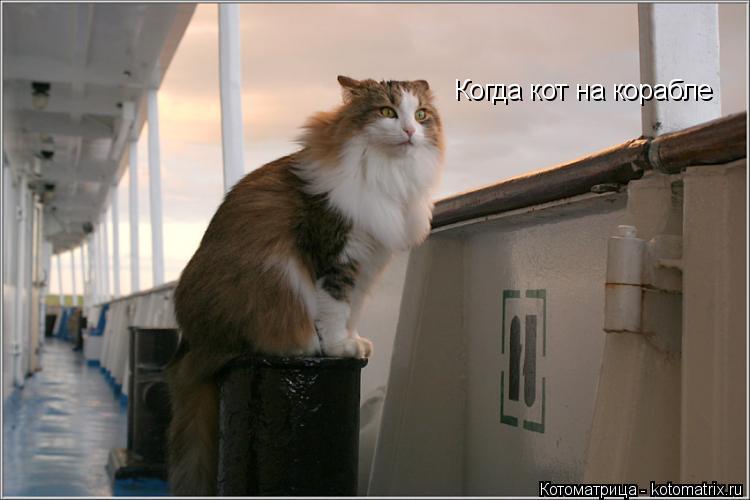 Котоматрица: Когда кот на корабле