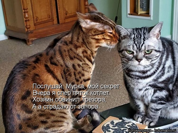 Котоматрица: Послушай, Мурка, мой секрет: Вчера я спер пяток котлет. Хозяин обвинил Трезора, А а страдаю от запора.