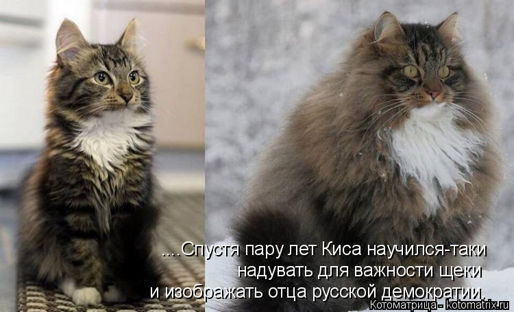 Котоматрица: ....Спустя пару лет Киса научился-таки надувать для важности щеки и изображать отца русской демократии.