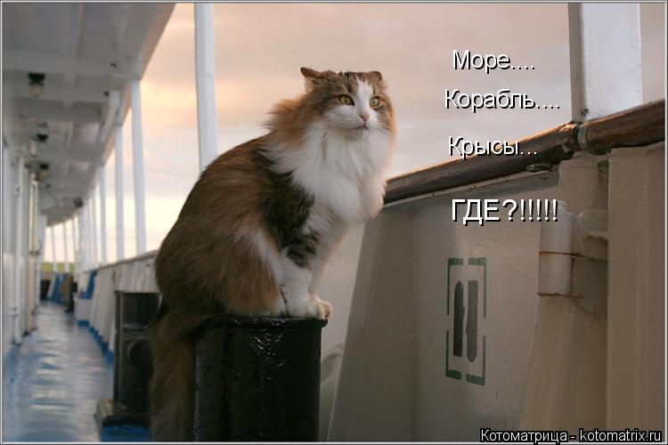 Котоматрица: Море.... Корабль.... Крысы... ГДЕ?!!!!!