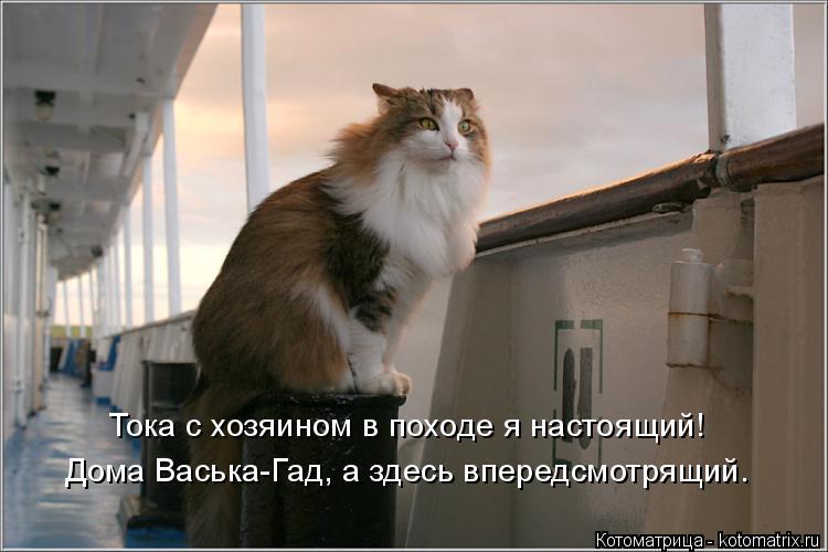 Котоматрица: Тока с хозяином в походе я настоящий! Дома Васька-Гад, а здесь впередсмотрящий.