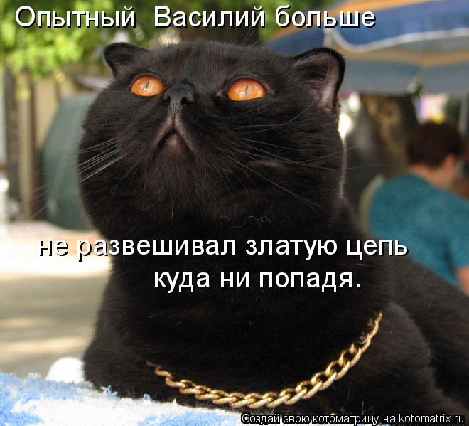 Котоматрица: Опытный  Василий больше  не развешивал златую цепь куда ни попадя.