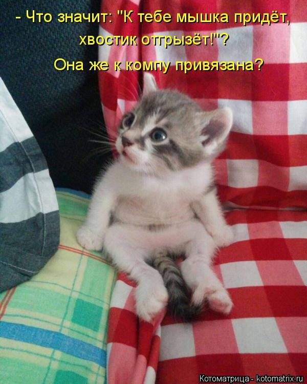 """Котоматрица: - Что значит: """"К тебе мышка придёт, хвостик отгрызёт!""""? Она же к компу привязана?"""