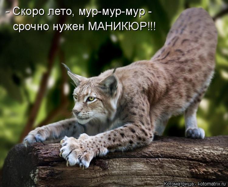 Котоматрица: - Скоро лето, мур-мур-мур - срочно нужен МАНИКЮР!!!