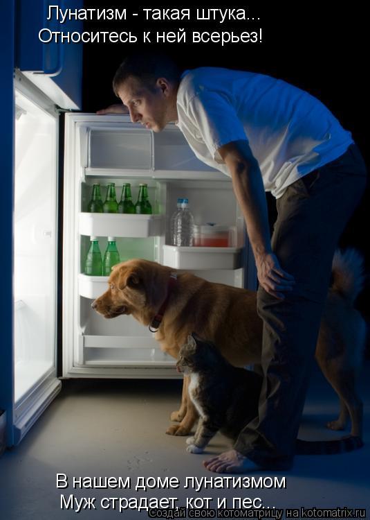 Котоматрица: Относитесь к ней всерьез! Лунатизм - такая штука... В нашем доме лунатизмом Муж страдает, кот и пес...