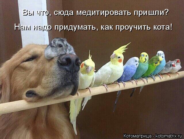 Котоматрица: Вы что, сюда медитировать пришли? Нам надо придумать, как проучить кота!