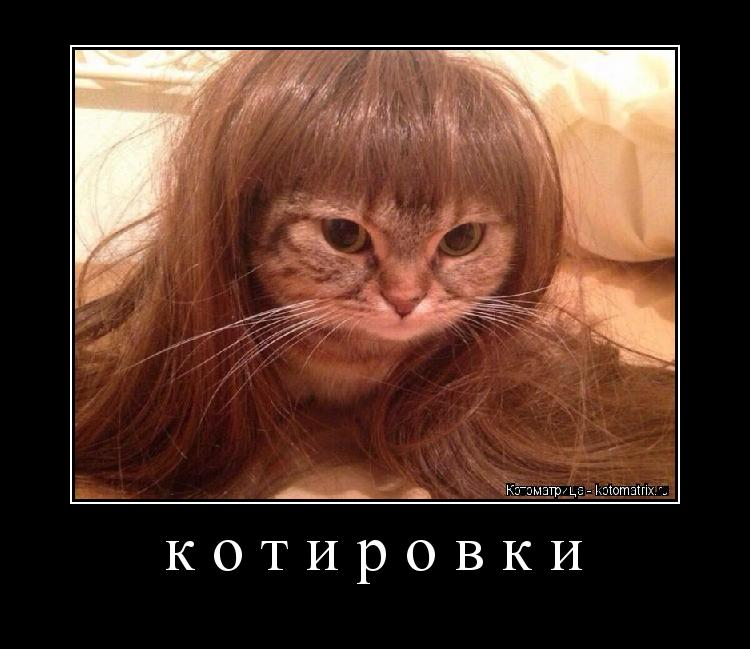 Котоматрица: котировки