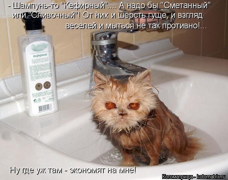 """Котоматрица: - Шампунь-то """"Кефирный"""".... А надо бы """"Сметанный""""  или """"Сливочный""""! От них и шерсть гуще, и взгляд  веселей и мыться не так противно!... Ну где уж там"""