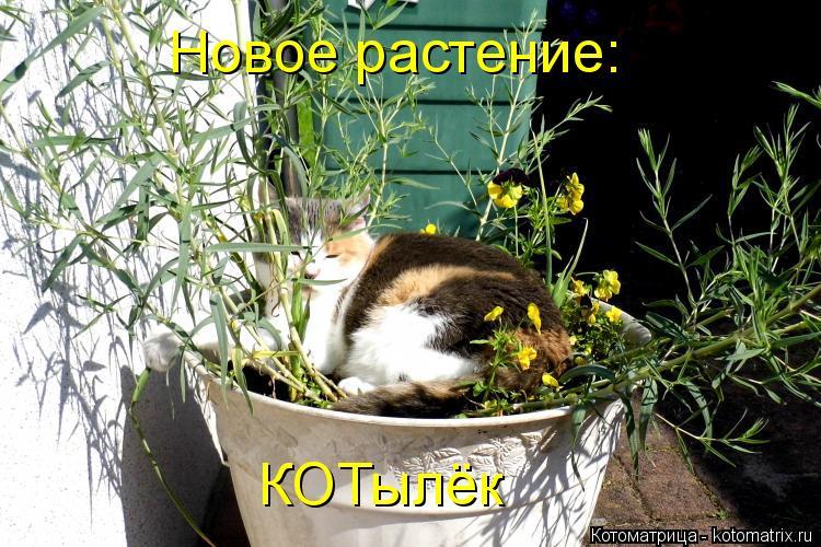 Котоматрица: Новое растение: КОТылёк