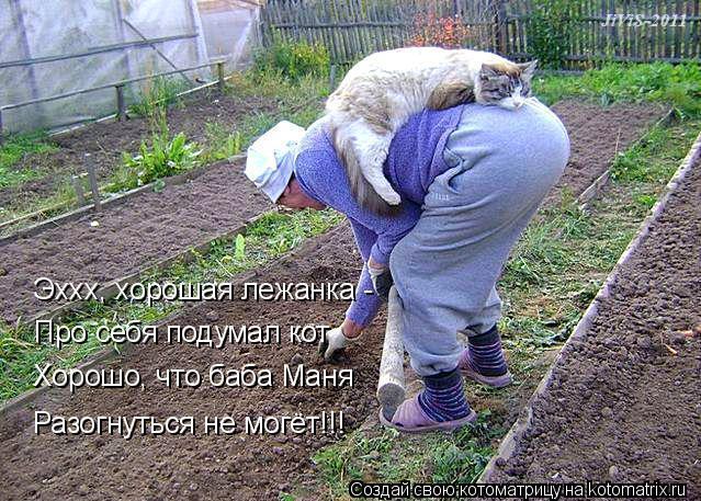 Котоматрица: Эххх, хорошая лежанка -  Про себя подумал кот Хорошо, что баба Маня Разогнуться не могёт!!!