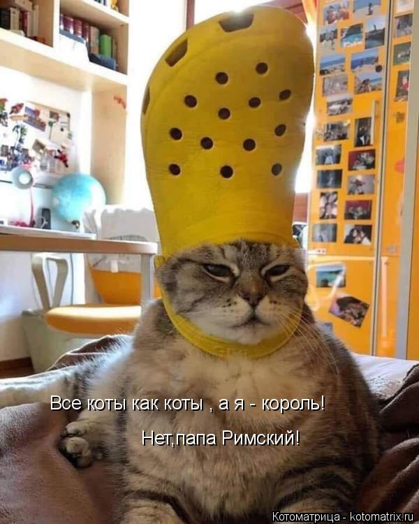 Котоматрица: Все коты как коты , а я - король! Нет,папа Римский!