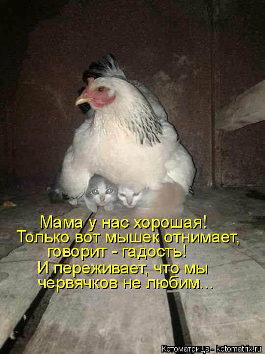 Котоматрица: Мама у нас хорошая! Только вот мышек отнимает, говорит - гадость! И переживает, что мы  червячков не любим...
