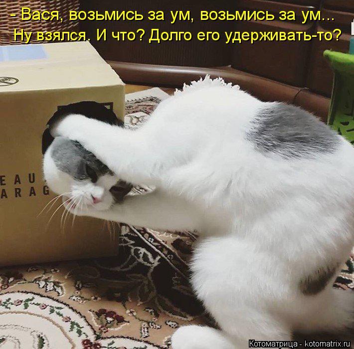Котоматрица: - Вася, возьмись за ум, возьмись за ум... Ну взялся. И что? Долго его удерживать-то?