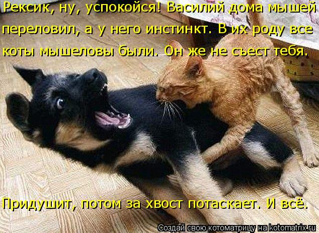 Котоматрица: переловил, а у него инстинкт. В их роду все коты мышеловы были. Он же не съест тебя. Рексик, ну, успокойся! Василий дома мышей Придушит, потом з