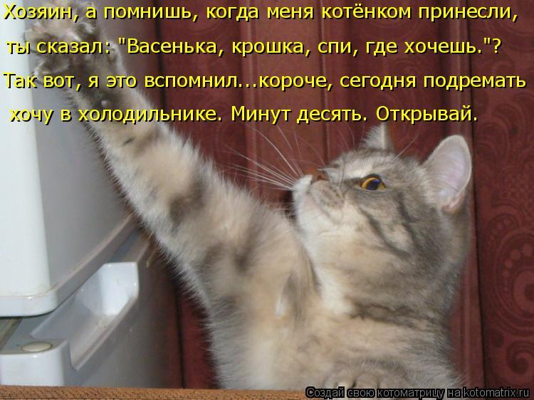 """Котоматрица: ты сказал: """"Васенька, крошка, спи, где хочешь.""""? Хозяин, а помнишь, когда меня котёнком принесли,  хочу в холодильнике. Минут десять. Открывай. Т"""