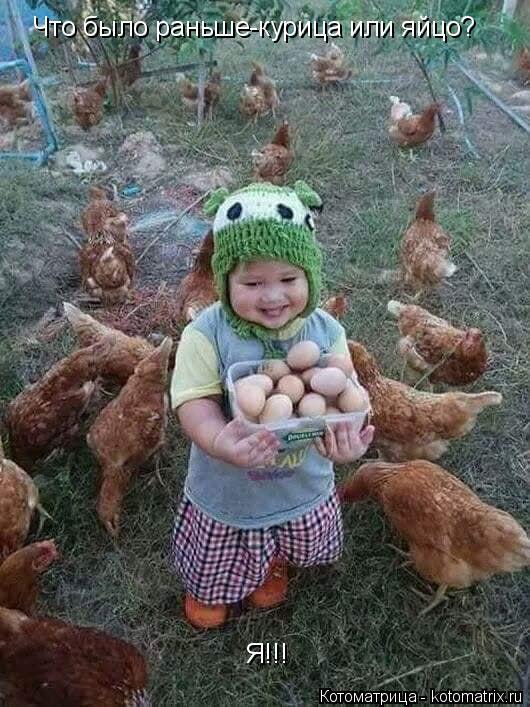 Котоматрица: Что было раньше-курица или яйцо? Я!!!