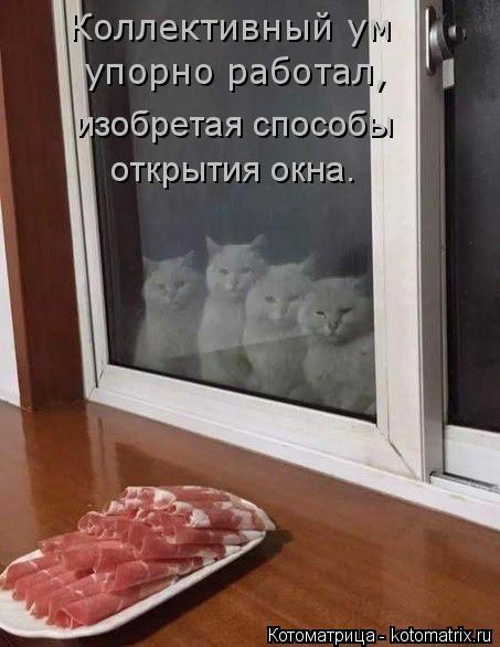 Котоматрица: Коллективный ум  упорно работал, изобретая способы  открытия окна.