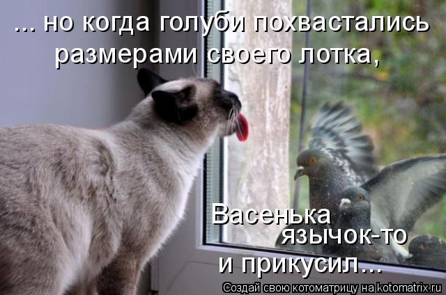 Котоматрица: ... но когда голуби похвастались размерами своего лотка, Васенька язычок-то и прикусил...