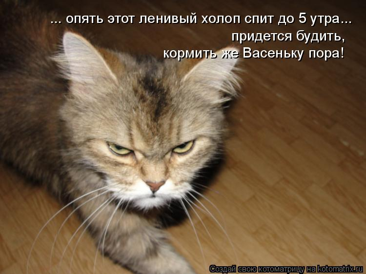 Котоматрица: ... опять этот ленивый холоп спит до 5 утра... придется будить, кормить же Васеньку пора!
