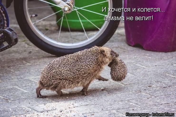 Котоматрица: И хочется и колется... а мама не велит!