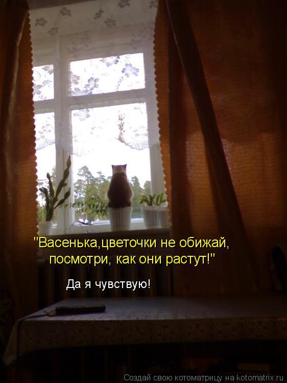 """Котоматрица: """"Васенька,цветочки не обижай, посмотри, как они растут!"""" Да я чувствую!"""