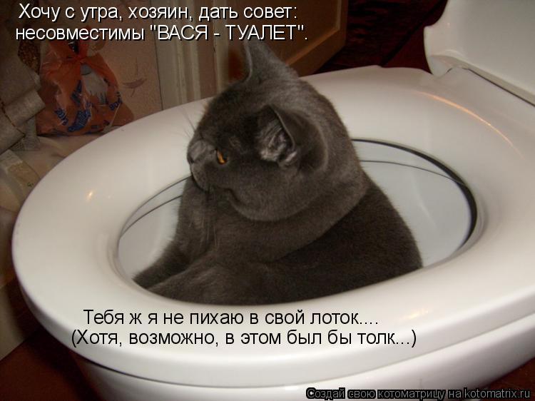 """Котоматрица: Хочу с утра, хозяин, дать совет: несовместимы """"ВАСЯ - ТУАЛЕТ"""". Тебя ж я не пихаю в свой лоток.... (Хотя, возможно, в этом был бы толк...)"""