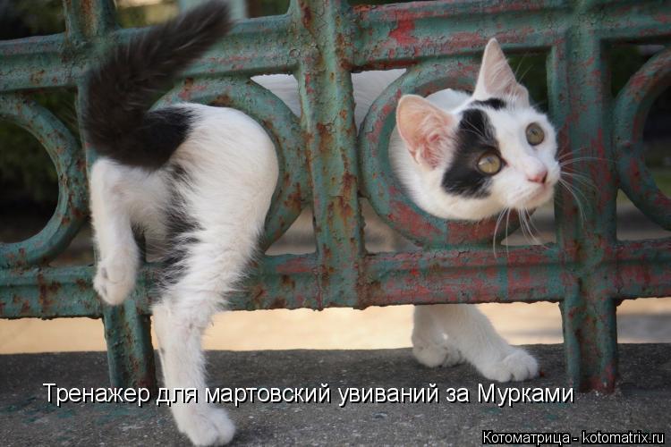 Котоматрица: Тренажер для мартовский увиваний за Мурками