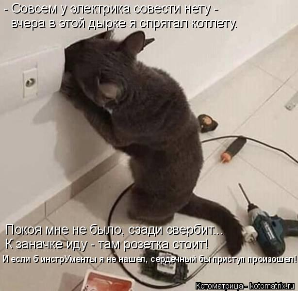 Котоматрица: - Совсем у электрика совести нету - Покоя мне не было, сзади свербит... К заначке иду - там розетка стоит! вчера в этой дырке я спрятал котлету. ?