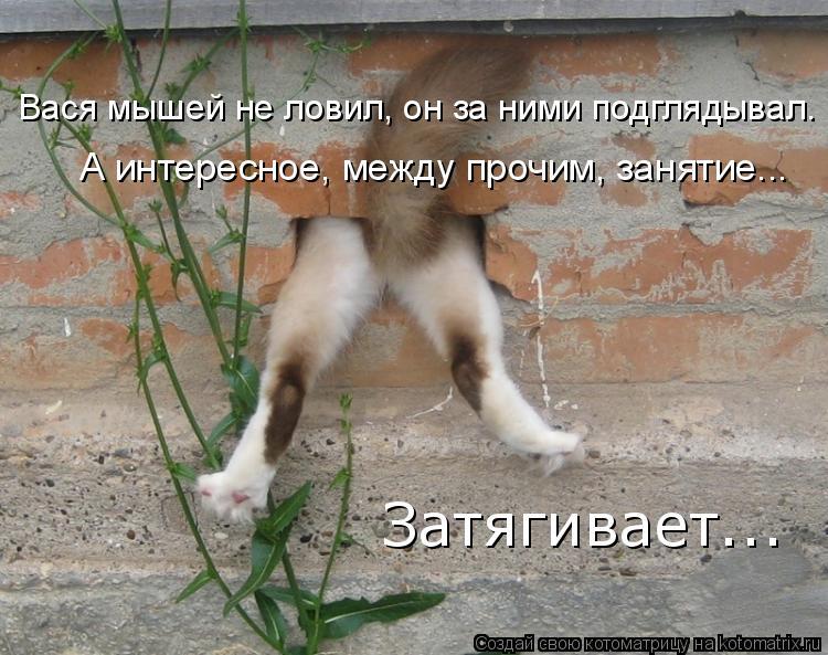 Котоматрица: Вася мышей не ловил, он за ними подглядывал. А интересное, между прочим, занятие... Затягивает...