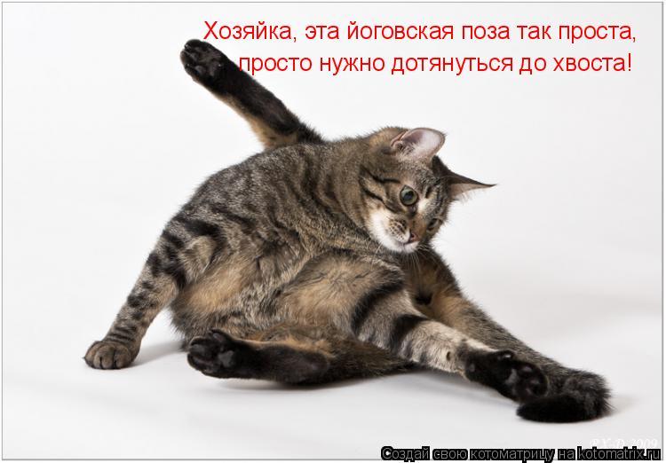 Котоматрица: Хозяйка, эта йоговская поза так проста, просто нужно дотянуться до хвоста!