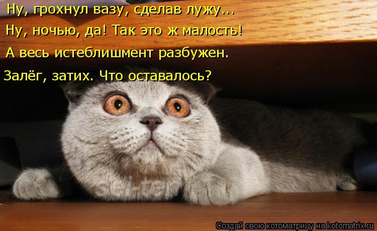 Котоматрица: Ну, грохнул вазу, сделав лужу... Ну, ночью, да! Так это ж малость! А весь истеблишмент разбужен. Залёг, затих. Что оставалось?